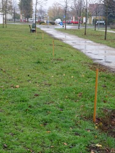 Vorschlag Großbäume (Spitzahorn) für den Park bei der Polizei/EVN