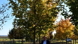 So sollen die Bäume im kommenden Herbst aussehen!